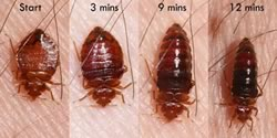 Bed Bugs Central Termite And Pest In Arkansas