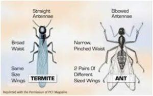 Termite 101 | Central Termite and Pest in Arkansas