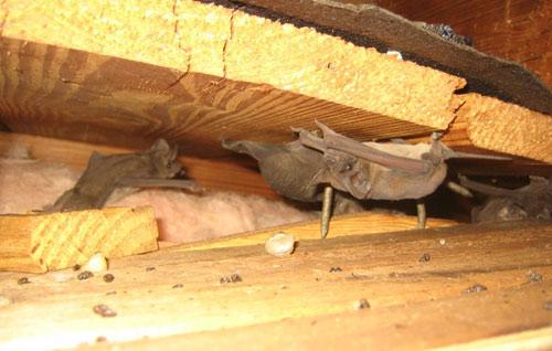 Bats between floors