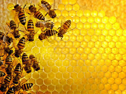 Honey Bees on a Cone