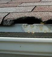 Roof damage by raccoon