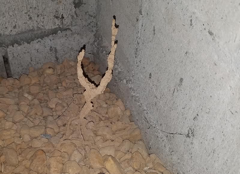 Termite Tube